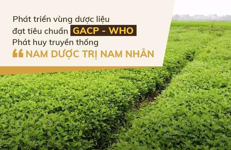 Cận cảnh vườn chuyên canh dược liệu nhà thuốc Đỗ Minh Đường