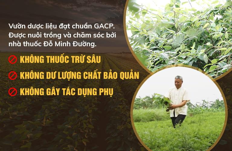 Vườn dược liệu đạt tiêu chuẩn của Đỗ Minh Đường