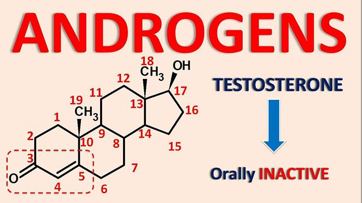 Hormone androgen là một loại hormone chủ yếu tồn tại ở cơ thể nam giới và chỉ chiếm một phần nhỏ trong cơ thể phụ nữ